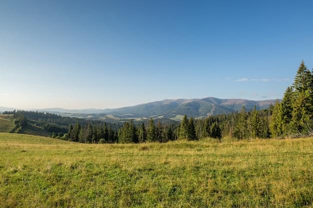 Prairie de montagne avec herbe verte, sentier, forêt et montagnes