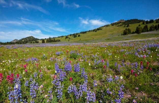 Prairie de montagne en journée ensoleillée. paysage d'été naturel.