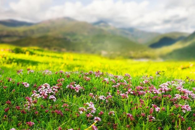 Prairie montagneuse dans les pyrénées