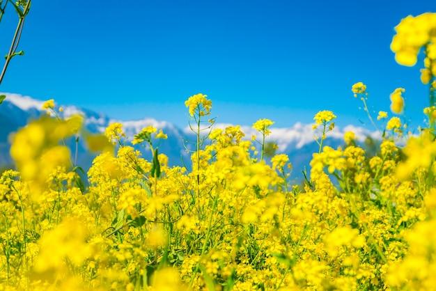Prairie de neige plante de paysage de printemps