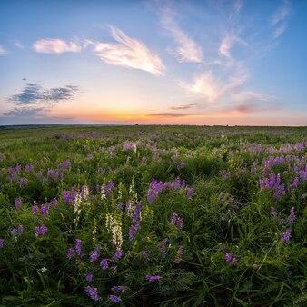 Prairie de printemps avec fleur, nuages majestueux dans le ciel au lever du soleil, beau paysage