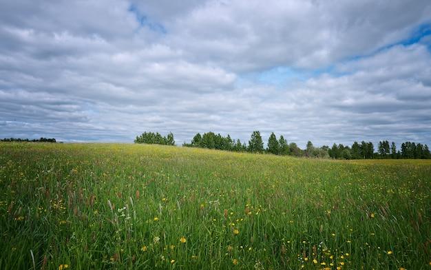 Prairie de printemps russe avec des fleurs. région d'arkhangelsk. nord russe.
