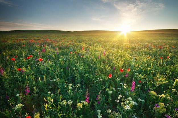 Prairie de printemps