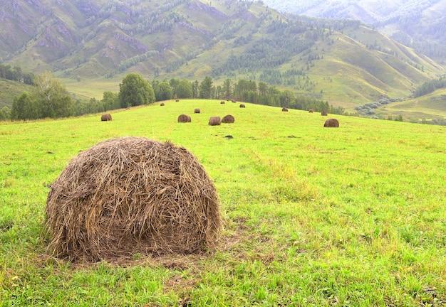 Une prairie tondue vert vif à la campagne sur fond de montagnes verdoyantes de la sibérie