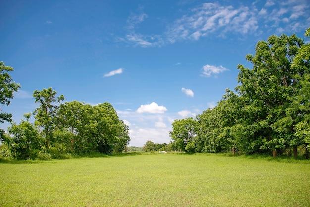 Prairie verte avec un ciel bleu