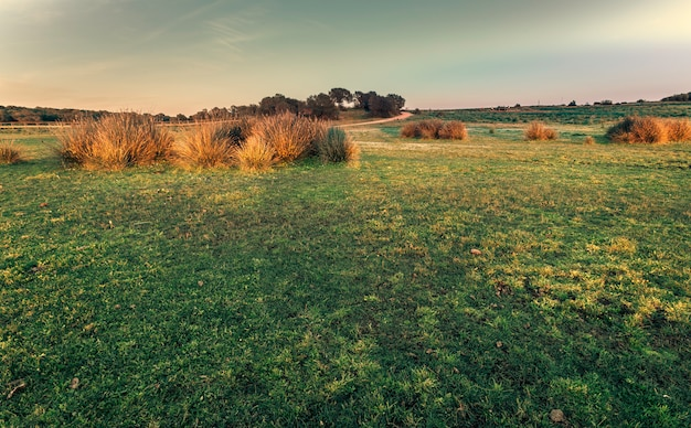 Prairie verte entourée de buissons sur une belle journée de printemps ensoleillée