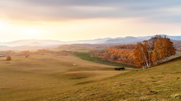 Prairies d'automne de la mongolie intérieure