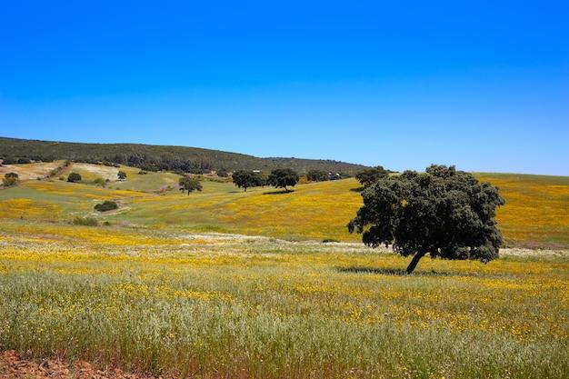Prairies dehesa par le chemin de la plata espagne
