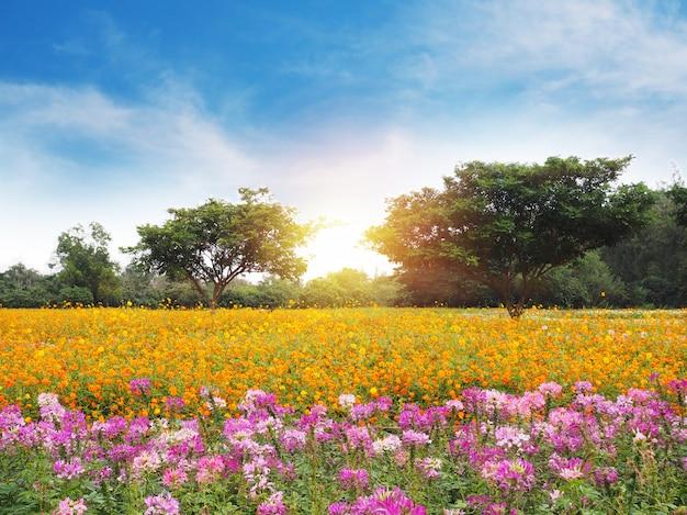 Pré de fleurs colorées et ciel bleu avec des nuages blancs.