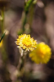 Pré de fleurs, différent dans le domaine, printemps, pollinisation, beauté.
