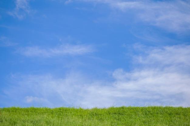 Pré vert et paysage de ciel bleu