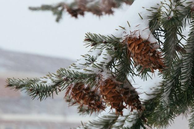 Premières cônes de pin des neiges noël arborvitae belles cloches lumineuses