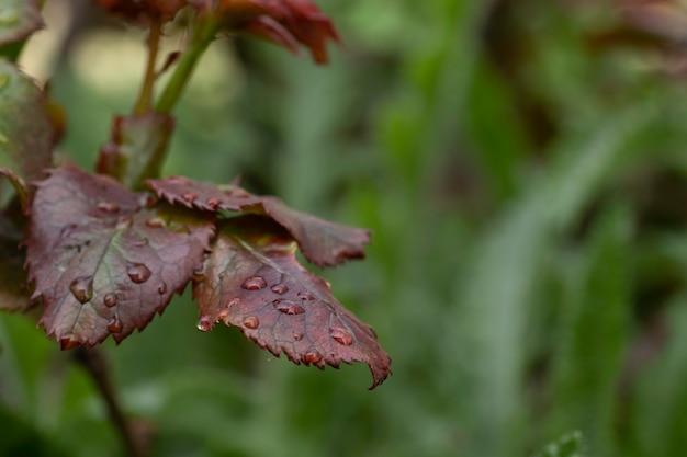 Premières feuilles au début de l'été