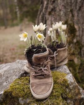 Les premières fleurs du printemps ont poussé dans de vieilles chaussures