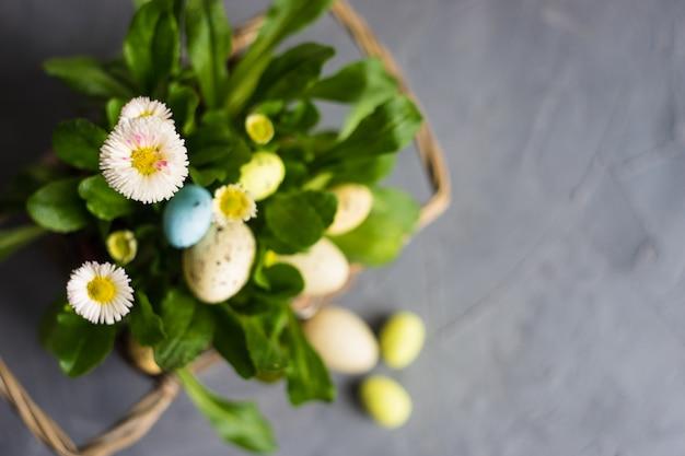 Premières fleurs du printemps en pot