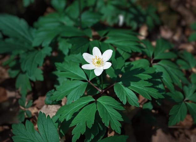 Premières fleurs printanières.