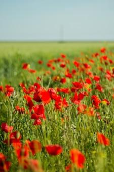 Les premières fleurs printanières.