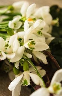 Premières perce-neige de fleurs printanières