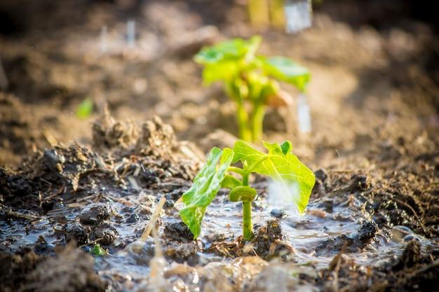 Prendre soin d'une nouvelle vie. arroser les jeunes plantes. les mains de l'enfant mise au point sélective.