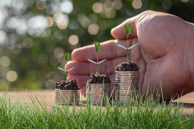 Prendre soin des petits arbres verts à la main