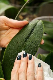 Prendre soin des plantes en les arrosant avec un liquide spécial