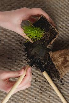 Préparation à la transplantation saisonnière de plantes. vue de dessus,