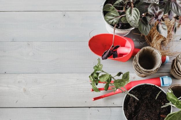 Préparer le printemps pour transplanter des plantes. pot, pelle, plantes succulentes