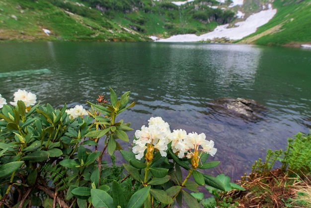 Prés alpins et fleurs