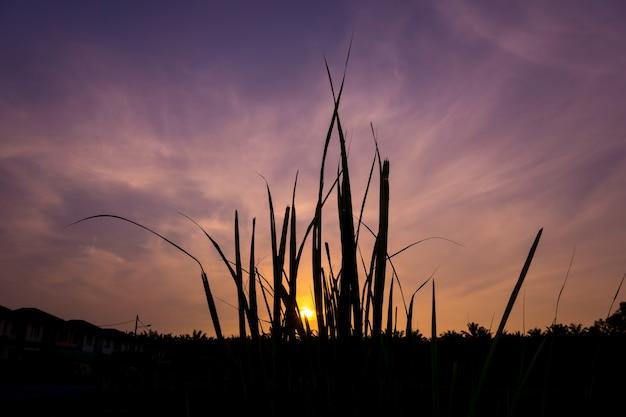 Prés immergeant l'énergie du lever du soleil.