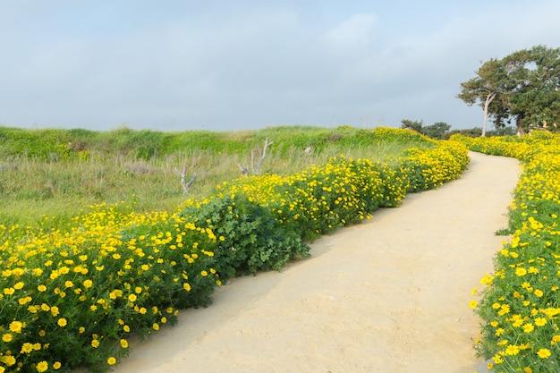 Printemps avec de belles fleurs jaunes