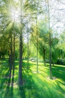 Printemps, closeup, extérieur, paysage, troncs, été