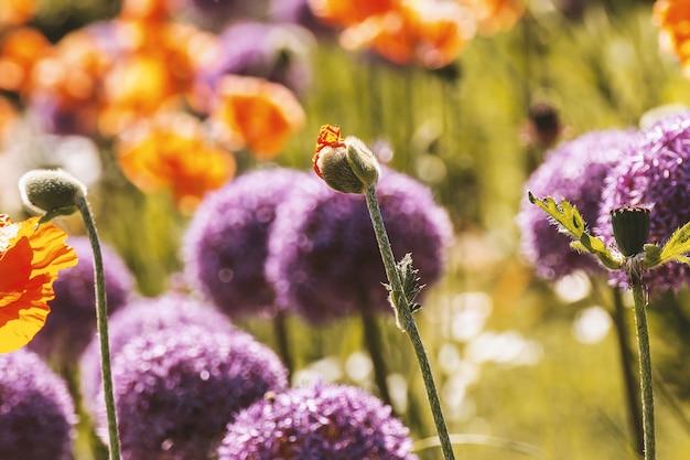 Le printemps commence. beutiful fleurs sur la prairie
