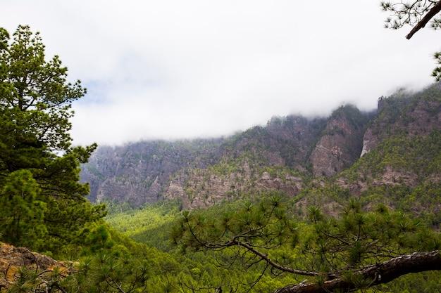 Printemps à cumbrecita, parc naturel de la caldera de taburiente, l'île de la palma, canary islands, spain