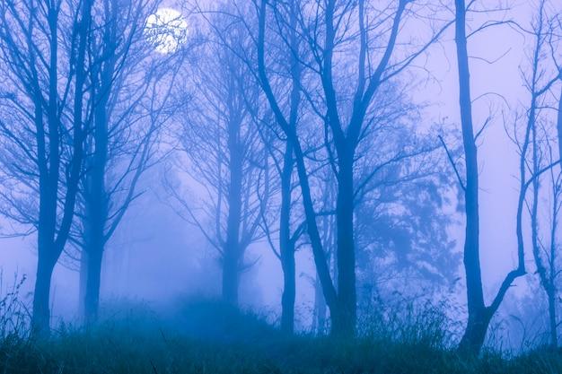 Printemps. un épais brouillard dans la forêt nocturne. grande pleine lune derrière les branches des arbres