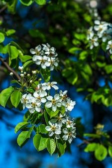 Printemps fond de fleurs de cerisier et de brindilles de bois