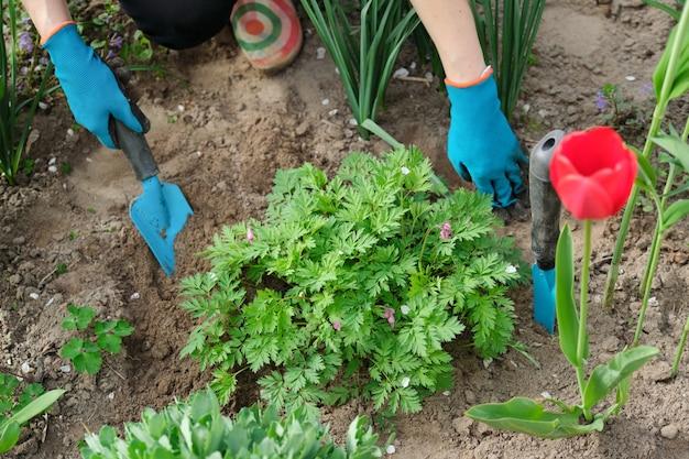 Printemps, jardinage saisonnier de printemps