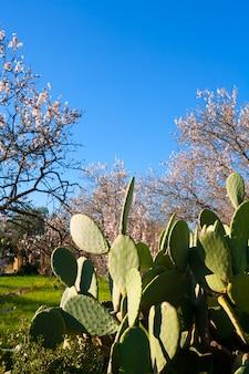 Printemps méditerranéen à javea denia avec fleurs aux amandes