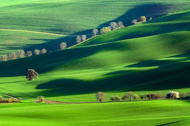 Printemps nature paysage rural avec floraison des arbres en fleurs sur des collines ondulées vertes.