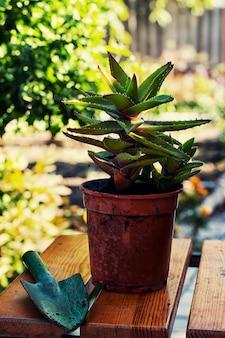 Printemps, plantes, soins
