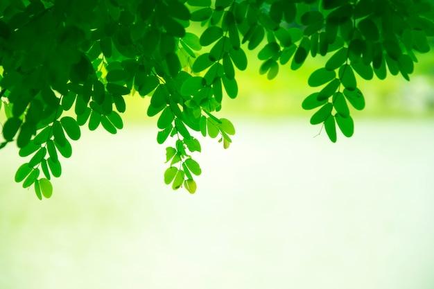 Printemps vert frais laisse fond