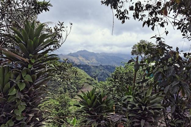 Prise de vue au grand angle d'arbres et de forêts sur une montagne pendant la journée