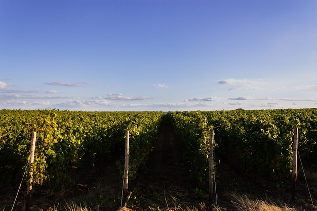 Prise de vue au grand angle de différents ensembles de plantations côte à côte