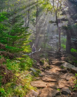 Prise de vue fascinante d'une belle zone forestière sous la lumière du soleil