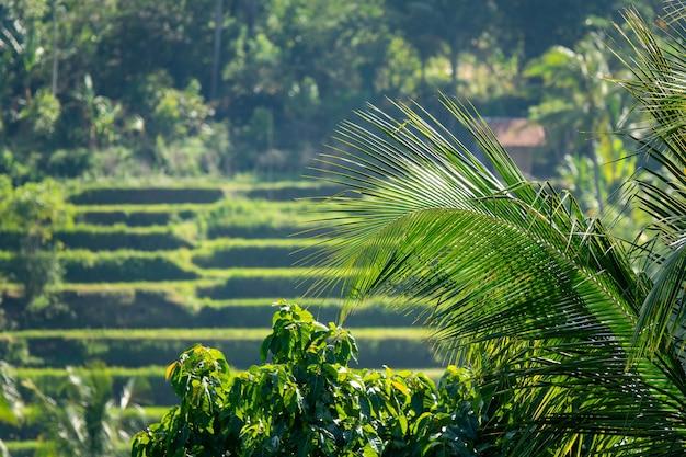 Prise de vue floue d'une plantation en terrasse