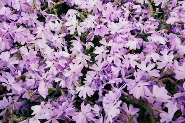 Prise de vue en grand angle de belles fleurs violettes dans un champ capturé par une journée ensoleillée