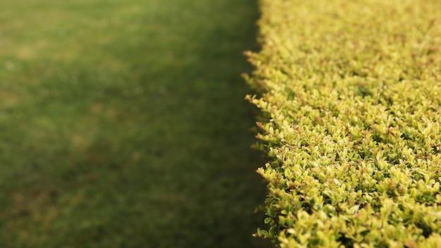 Prise de vue en grand angle des buissons sur une pelouse couverte d'herbe