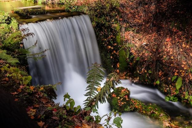 Prise de vue en grand angle d'une cascade dans une forêt à karuizawa. tokyo, japon