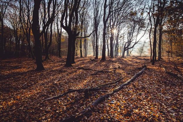 Prise de vue en grand angle de feuilles d'automne rouges sur le sol dans une forêt avec des arbres sur le dos au coucher du soleil