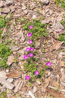 Prise de vue en grand angle d'une fleur poussant sur le sol