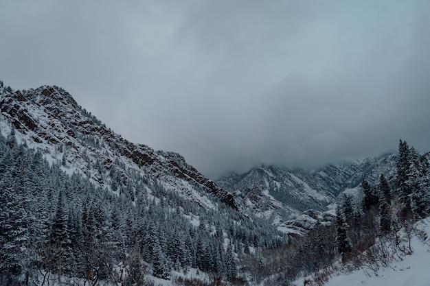 Prise de vue en grand angle d'une forêt d'épinettes dans les montagnes enneigées sous le ciel gris foncé